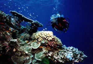 diving vanuatu