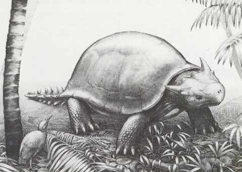 Vanuatu Giant Turtles – A Real Life Jurassic Park?
