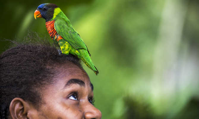 Vanuatu Birds and Where to Find Them
