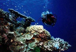 diver-10119-300x207